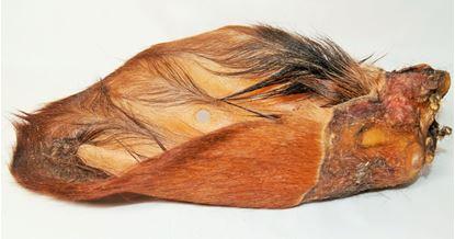 Billede af Okseøre med pels