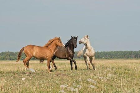 Billede til varegruppe Hest